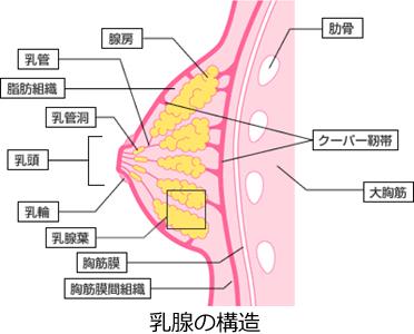 産後のバストアップマッサージ方法